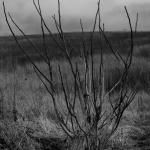 …un arbuste.