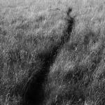 Le chemin du lapin